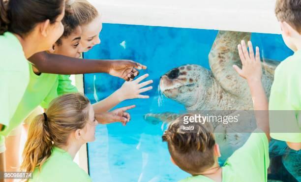 multi-étnica crianças assistindo tartaruga no aquário - miscigenado - fotografias e filmes do acervo