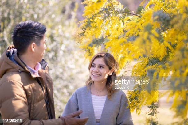 multi-ethnic couple looking at each other in mimosa blossoms - mimosa fiore foto e immagini stock