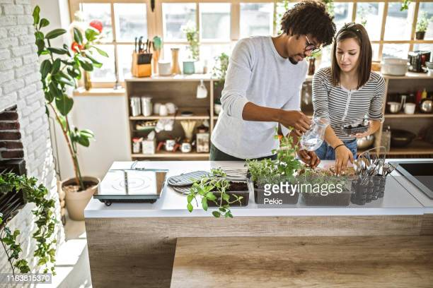 multi-ethnic couple taking care of kitchen herbs - herb stock pictures, royalty-free photos & images