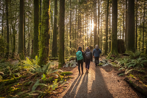 Multi-Ethnic Family Walking Along Sunlit Forest Trail, Father and Daughters 1144277133