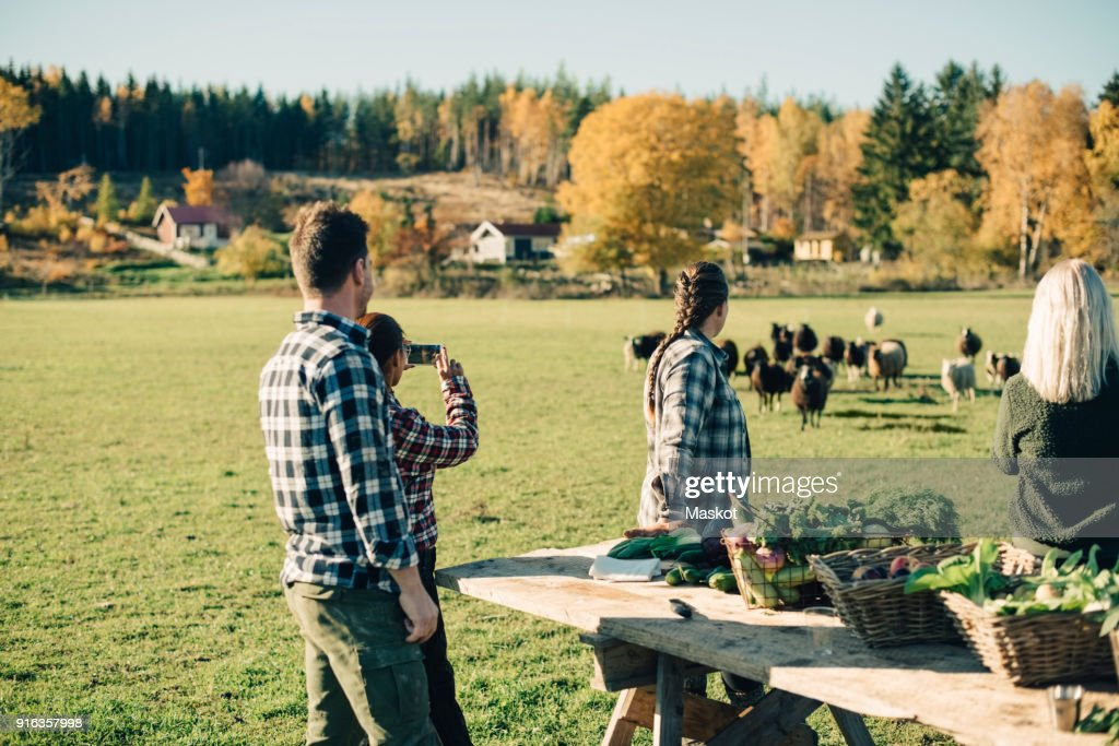 Multi-ethnic farmers watching herd of sheep at field : Stock-Foto