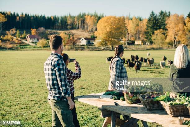 Multi-ethnic farmers watching herd of sheep at field