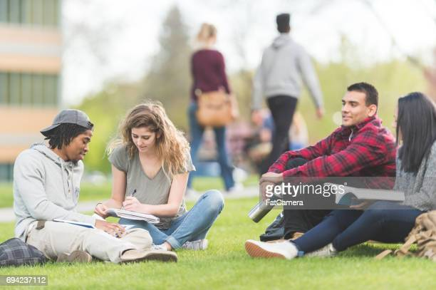 Multiethnic group of college students study on grassy lawn together