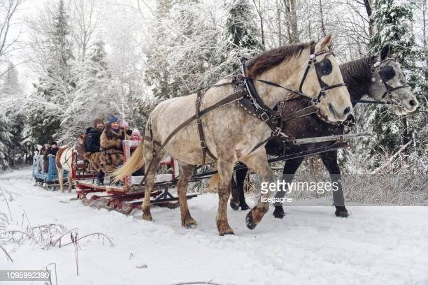 multi-ethnic group sleigh riding - sled stock pictures, royalty-free photos & images