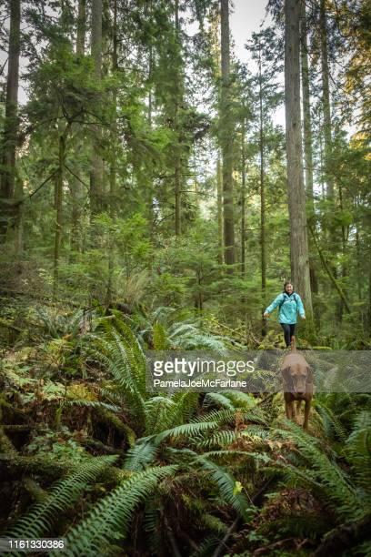 multi-ethnic teenaged girl hiking along fallen log with vizsla dog - wonderlust stock pictures, royalty-free photos & images