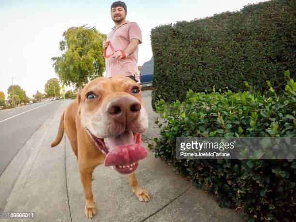 multi-ethnic young man walking friendly mixed breed dog, residential street - weitwinkelaufnahme stock-fotos und bilder