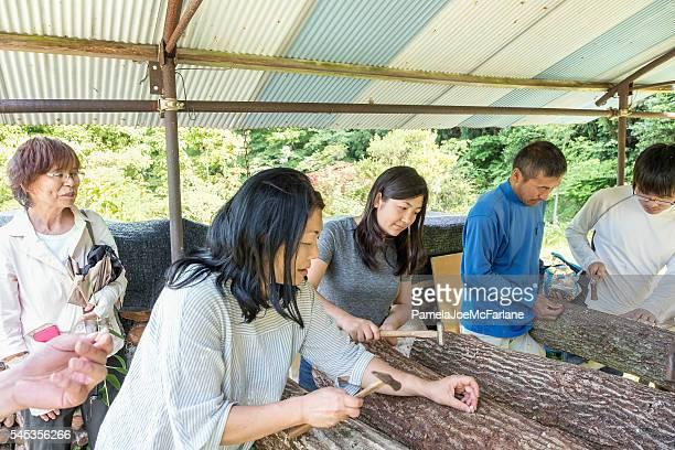Multi-Generation Family and Friends Innoculating Logs with Shitake Mushroom Plugs