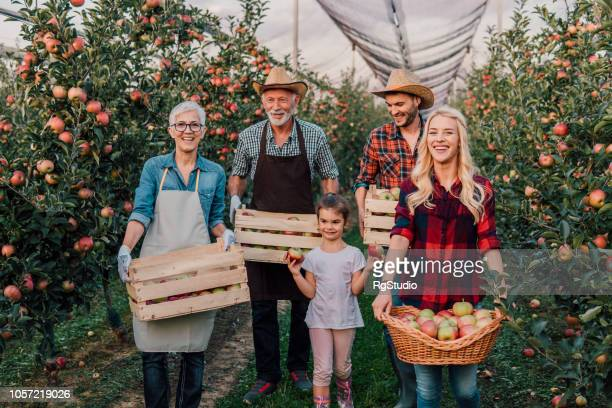 multi-generation family holding apples in the box - fall harvest stock pictures, royalty-free photos & images