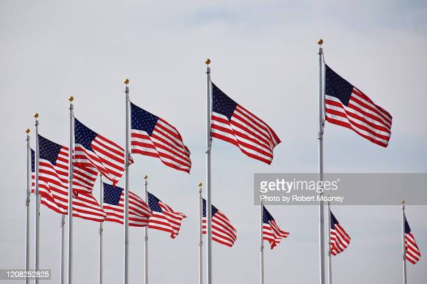 multiple american flags flying in the wind - washington dc stock pictures, royalty-free photos & images