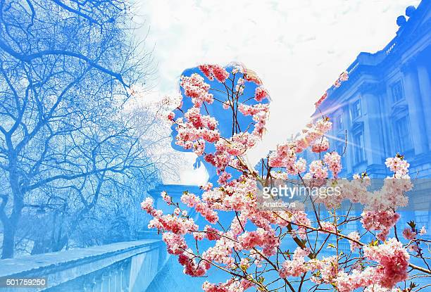 multiple exposure of girl and cherry blossoms - anatoleya stock pictures, royalty-free photos & images