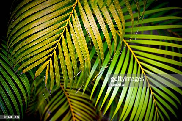 Multiple Palm leaves