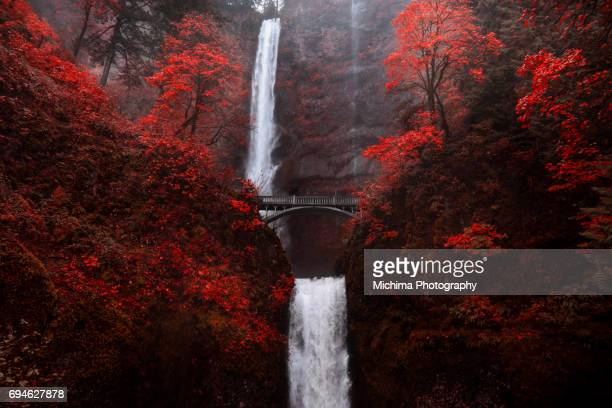multnomah falls autumn red - columbia river gorge stock pictures, royalty-free photos & images