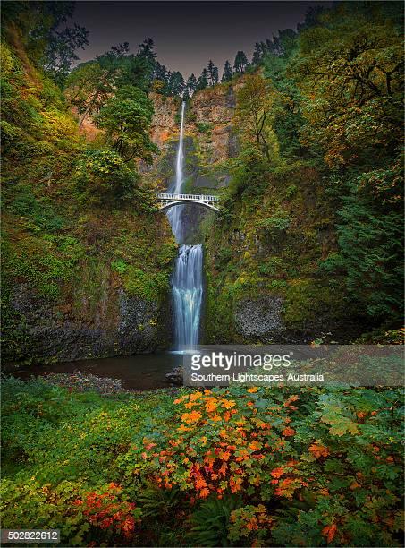multnomah falls, columbia river gorge, oregon, usa. - multnomah falls stock photos and pictures
