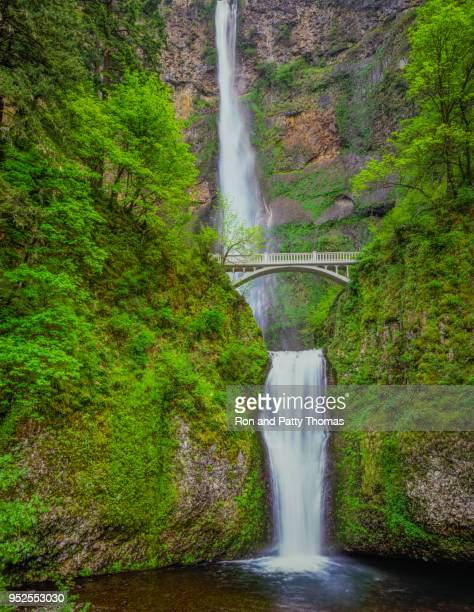 multnomah falls in columbia river gorge national scenic area, oregon - multnomah falls stock pictures, royalty-free photos & images