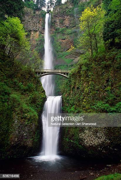 multnomah falls - dan sherwood photography stock pictures, royalty-free photos & images