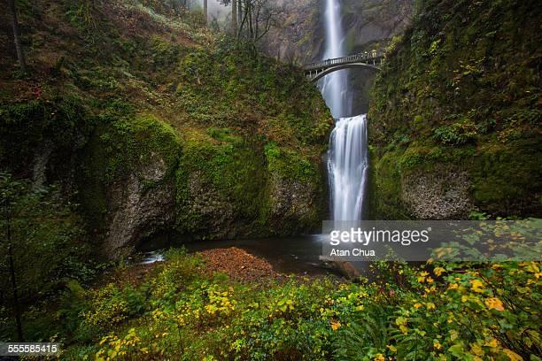multnomah falls - multnomah falls stock pictures, royalty-free photos & images