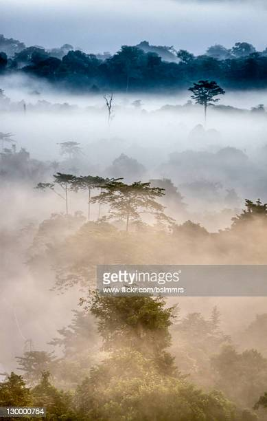 mulu morning mist - sarawak state stock pictures, royalty-free photos & images