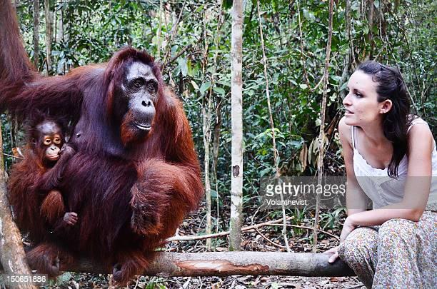 Mum and baby orangutan with tourist