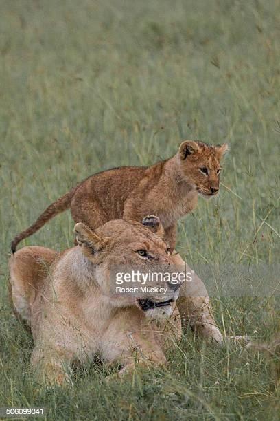 Mum & Cub
