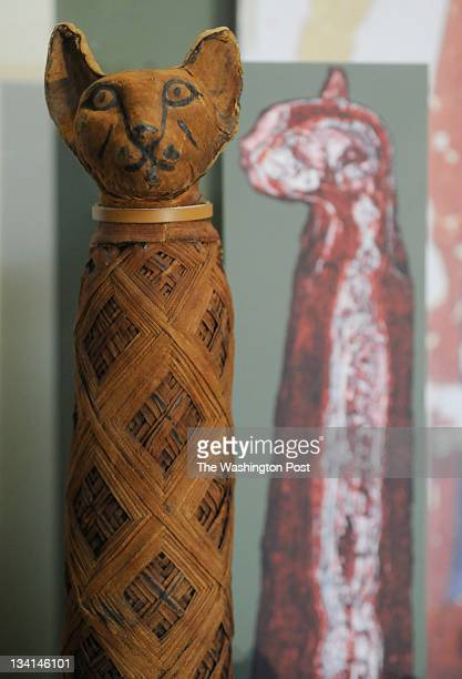 A mummified cat from 33230 BC with a CT scan behind it is part of the exhibit 'Eternal Life in Ancient Egypt' that opens November 17 2011 at the...