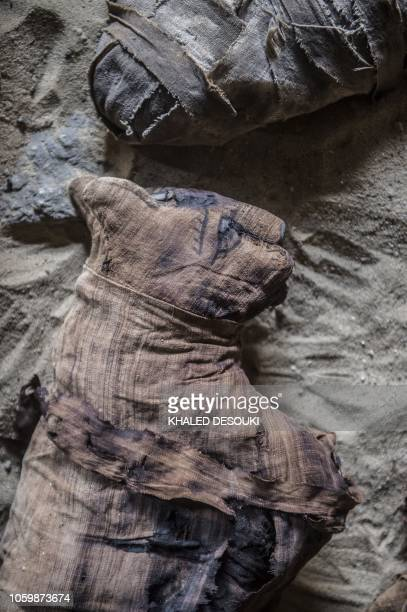Mummified cats are seen during the demonstration of a new discovery made by an Egyptian archaeological mission through excavation work at an area...