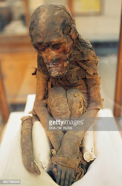 Mummified monkey Egyptian civilization New Kingdom Cairo Egyptian Museum