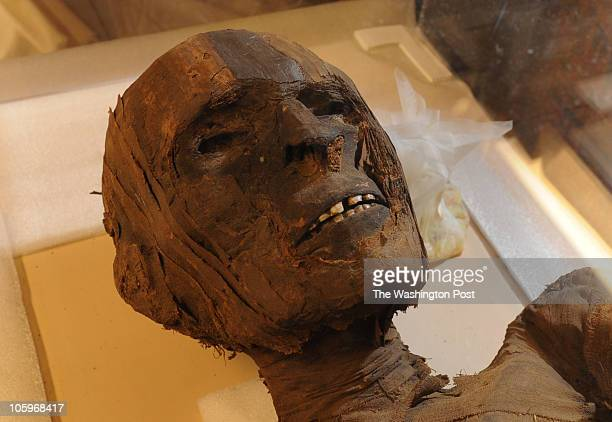 A mummy from Qena Upper Egypt that dates back to 1500 B C in the mummy collection room at the National Museum of Natural History on August 24 in...