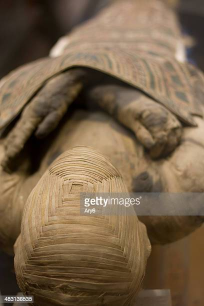 mummy - mummy stock photos and pictures