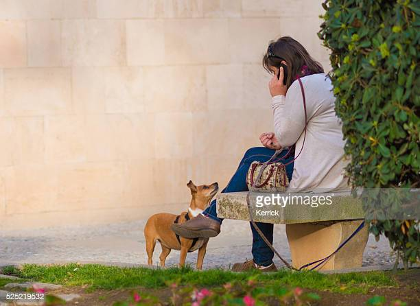 mummy, when you are ready? dog looking at phoning owner - animal call stock pictures, royalty-free photos & images