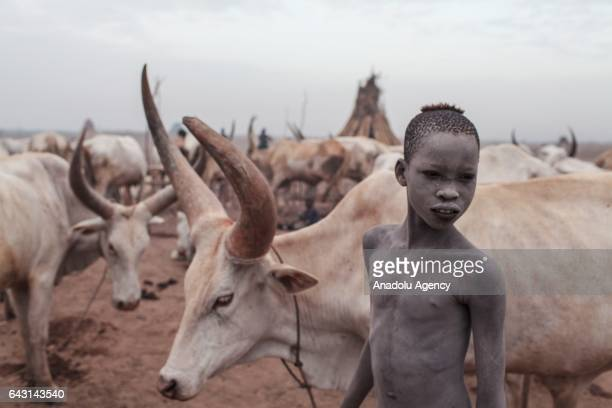 Mundari boy covered his face and body with ash to protect himself from insects and mosquitos is seen with his AnkoleWatusi cattles in Terekeka town...