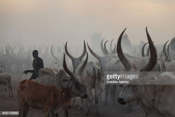 Mundari man is seen with his AnkoleWatusi cattles in Terekeka town of Juba South Sudan on February 9 2017 Munda people a small ethnic group of South...