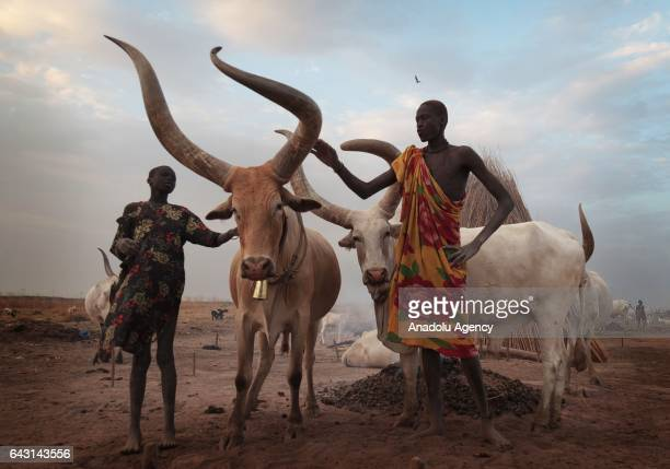 Mundari men are seen with their AnkoleWatusi cattles in Terekeka town of Juba South Sudan on February 9 2017 Munda people a small ethnic group of...