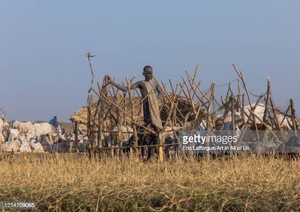 Mundari tribe boy in the middle of long horns cows in a cattle camp Central Equatoria Terekeka South Sudan on February 12 2020 in Terekeka South Sudan