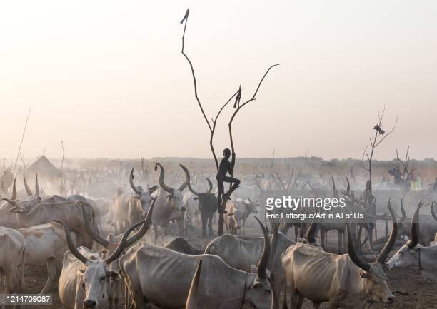 Mundari tribe boy standing on a wood mast to watch his cows Central Equatoria Terekeka South Sudan on February 12 2020 in Terekeka South Sudan