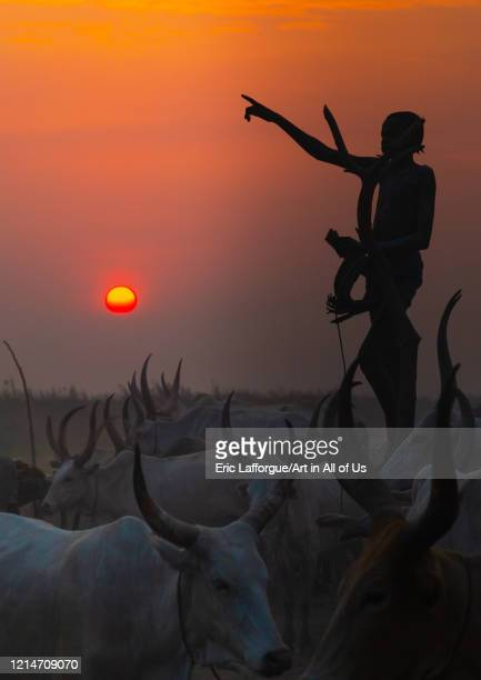 Mundari tribe boy standing on a wood mast to watch his cows in the sunset Central Equatoria Terekeka South Sudan on February 13 2020 in Terekeka...