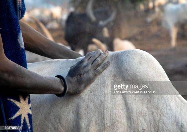 Mundari tribe man taking care of the long horns cows in a camp Central Equatoria Terekeka South Sudan on November 17 2019 in Terekeka South Sudan