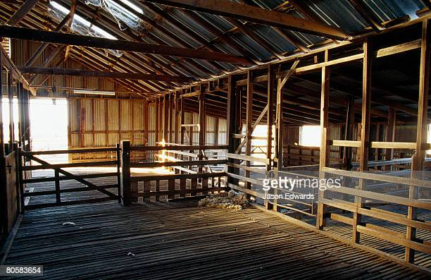 Inside an antique timber and corrugated tin sheep shearing shed.