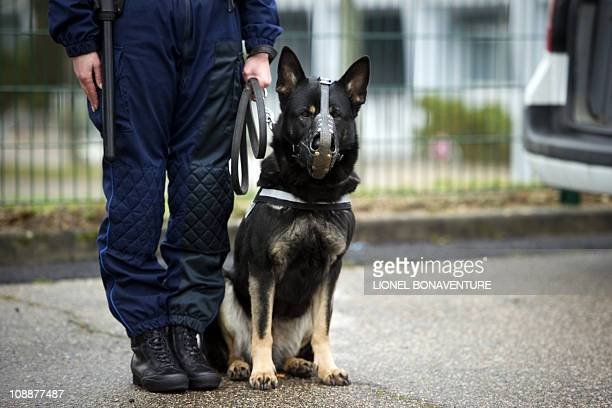 A municipal policeman and his dog stand guard as they wait for the visit of French President Nicolas Sarkozy on February 3 in Orleans center France...