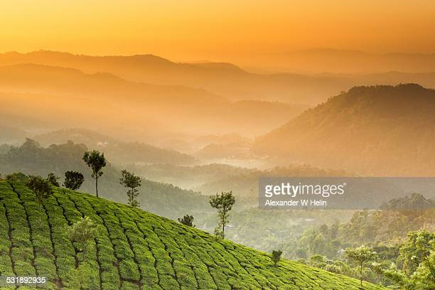 munnar sunrise - kerala stock pictures, royalty-free photos & images