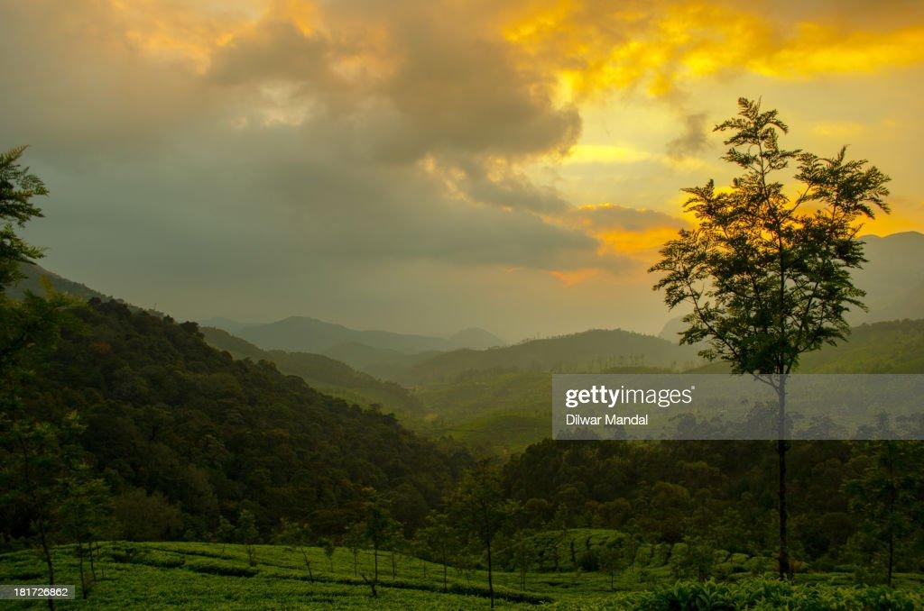 Munnar Sunset : Stockfoto