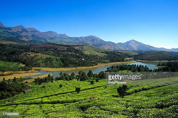 Munnar Tea Estate Kerala India