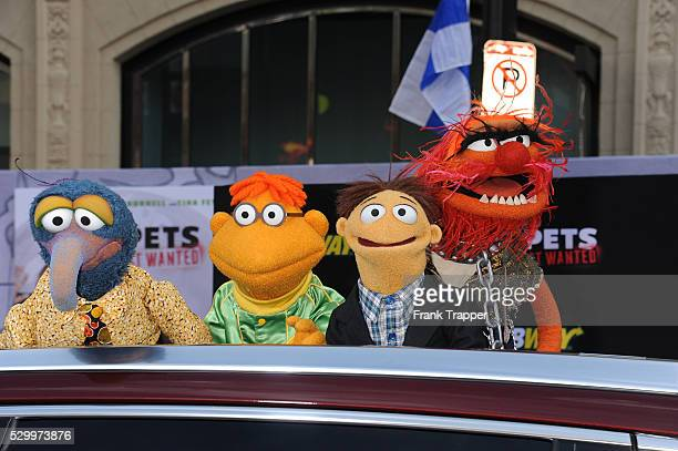 """Muppet characters The Great Gonzo, Scooter, Walter and Animal arrive at the premiere of Disney's """"Muppets Most Wanted'"""" held at the El Capitan..."""