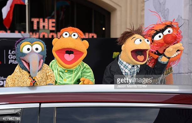 Muppet characters The Great Gonzo Scooter Walter and Animal attends the premiere of Disney's Muppets Most Wanted at the El Capitan Theatre on March...