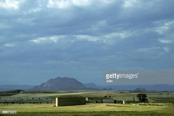 Murcia Cereals landscape