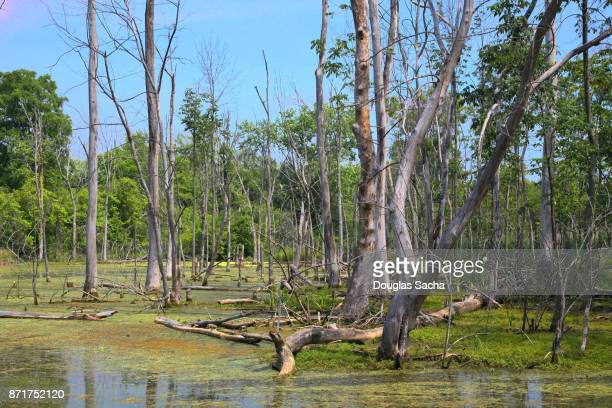 Murky swamp area, Metroparks, Cleveland, Ohio, USA
