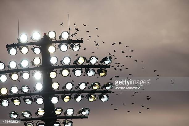 A murmuration of starlings fly past the floodlights during the Natwest T20 Blast match between Kent Spitfires and Hampshire at St Lawrence Ground on...