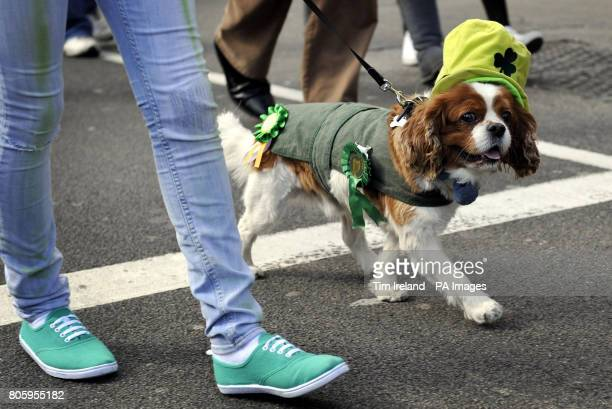 Murphy the dog from the Wheatsheaf pub in Stoke Newington marches along during The Mayor of London's St Patrick's Day Parade and Festival