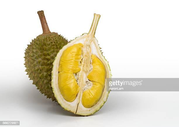 Musang (Fox) Durian of Malaysia