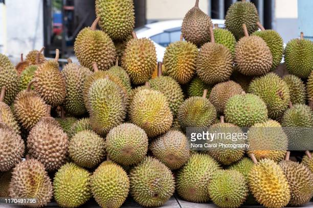 musang king durian - durian stock pictures, royalty-free photos & images