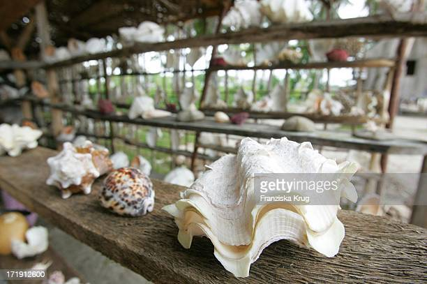 Muschelshop Auf Der Insel Mabul
